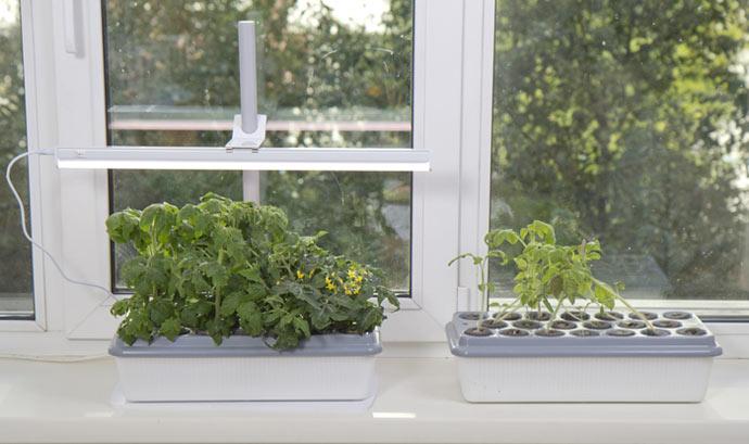 Дополнительное освещение комнатных растений и рассады на подоконнике