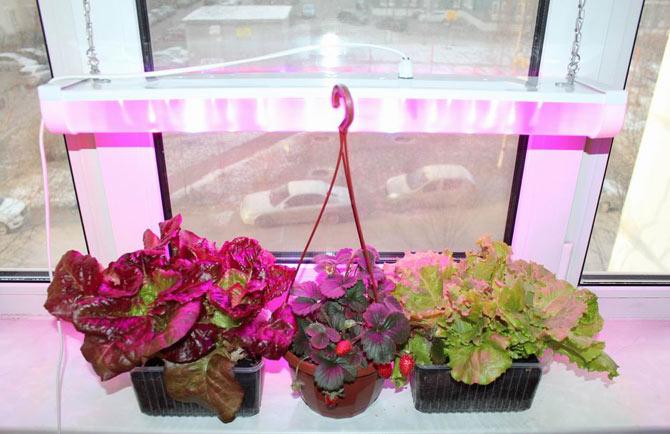 Работа лампы для подсветки растений