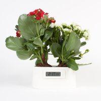 Горшок для растений HOME GARDEN